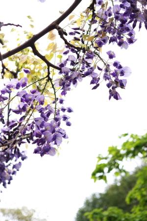 蔵出し・花Photo