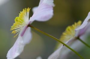 花Photo-2