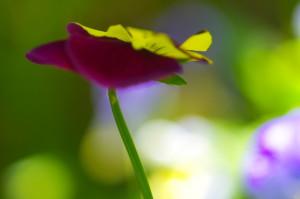 花Photo-3