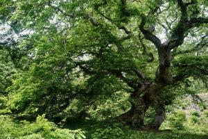 邑南町・香木の森へ