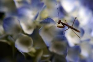花と虫とカエルと