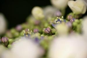 雨の花マクロ