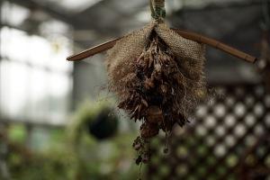 雨の花マクロ-2