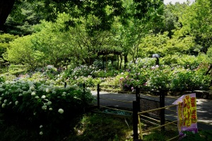 RX1の植物公園-2