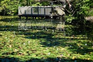 蛇の池から岩国へ