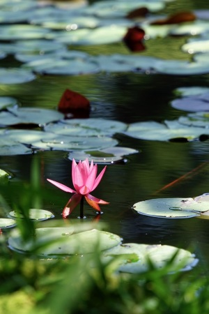 極楽寺・蛇の池