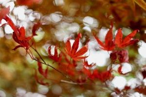 夏の花々、樹木たち