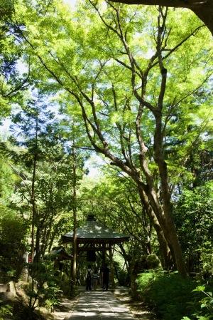 夏の三瀧寺