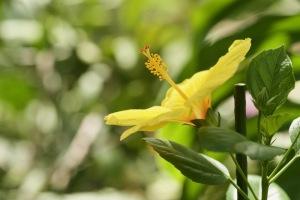 花を撮りに