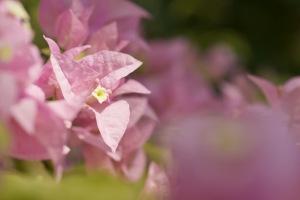 花を撮りに-2