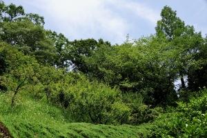 RX1の植物公園