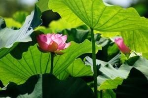 夏の花々・樹木