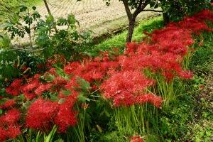 志和の秋花