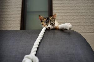 坂町海岸の猫
