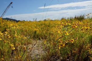 阿賀の花畑