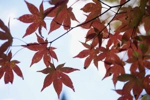 秋色スケッチ