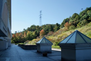 広域公園の秋色