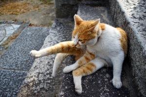 のんびり猫