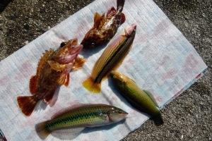 今秋の釣果