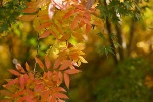 緑化・もみじ祭り-2