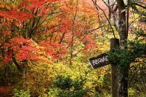 雨の紅葉・おおの自然観察の森
