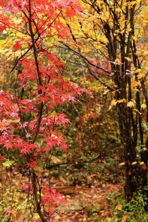大野の紅葉