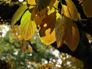 晩秋秋色・平和公園