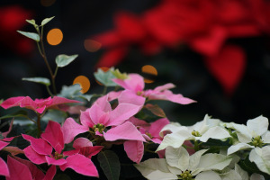 植物公園 花ごよみ