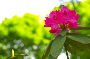2013花Photo